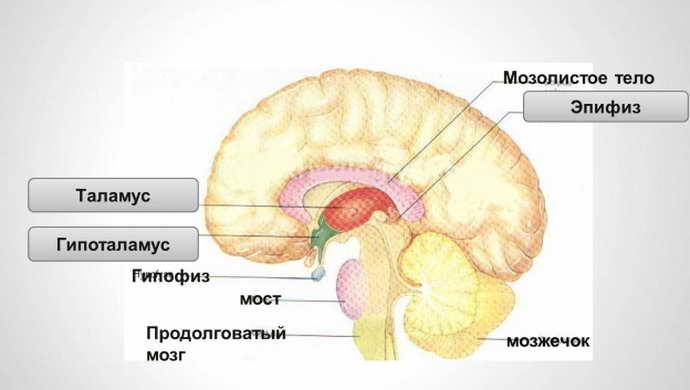 какие осложнения несет в себе краниофарингиома головного мозга