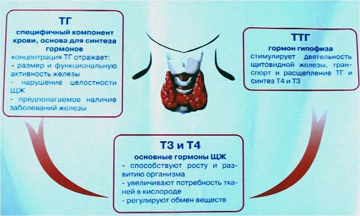 ТТГ у женщин норма по возрасту (таблица)