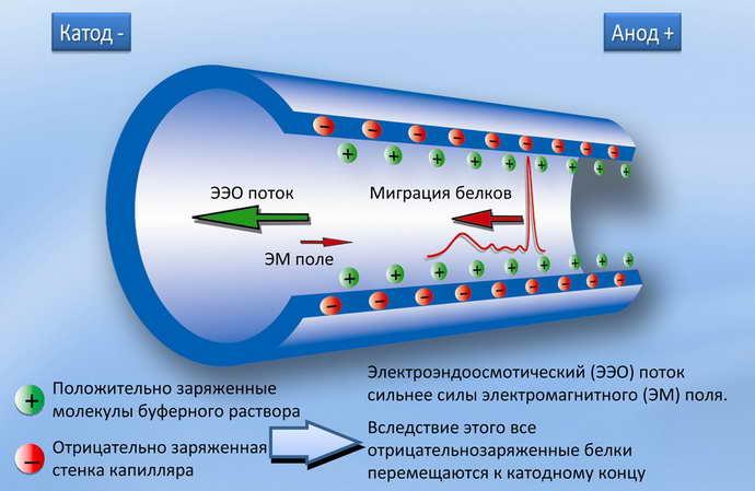 Действие электрофореза при остеохондрозе
