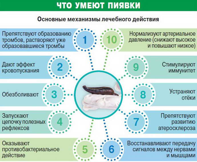пиявки при остеохондроз шейного отдела особенности их использования