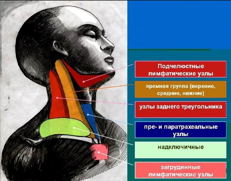 Регионарные лимфоузлы щитовидной железы
