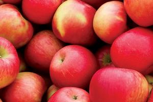 после яблок сильно пучит живот