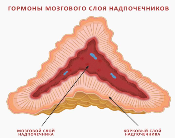 воспаление надпочечников симптомы