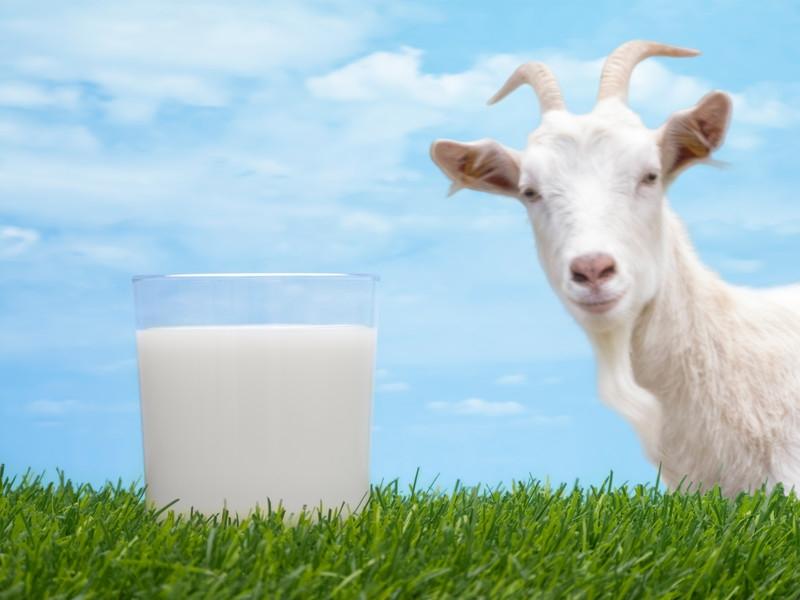 Козье молоко при ГВ