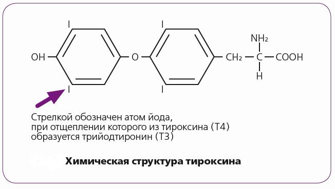 эль тироксин