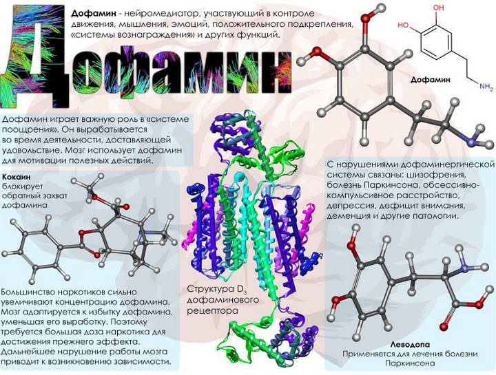 Роль гормона дофамин в организме
