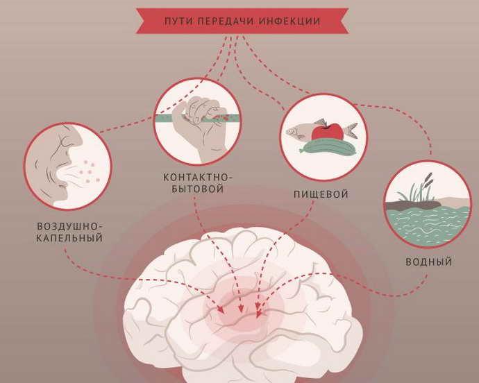 Основные пути передачи менингита