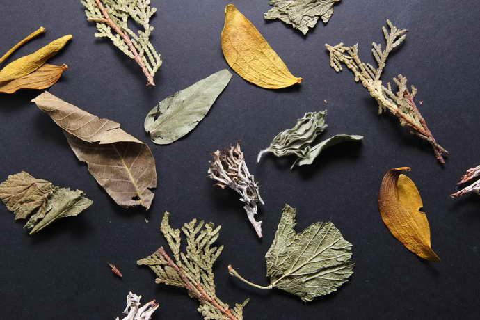 Польза семян и растительности при рассеянном склерозе