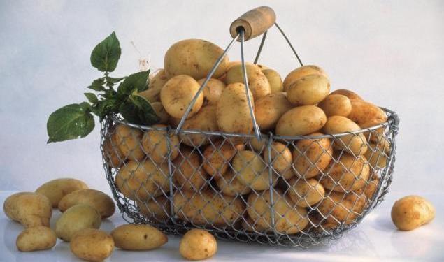 Картофель при грудном вскармливании