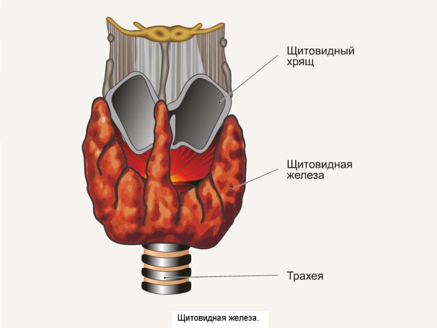 рак щитовидки симптомы