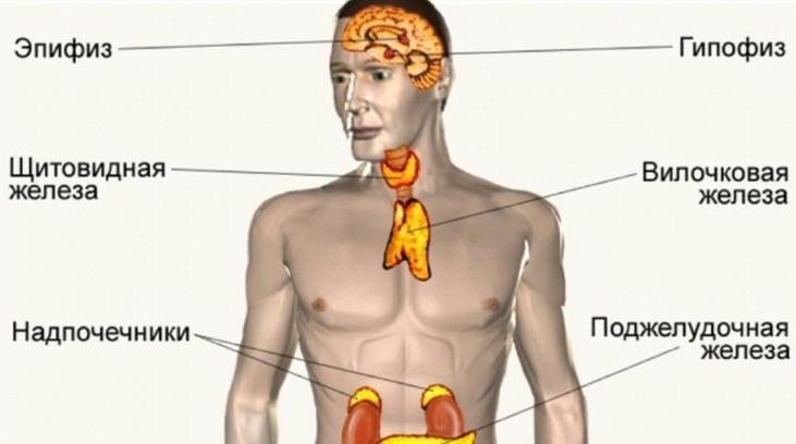 ГСПГ гормон — что это такое у женщин и мужчин, норма