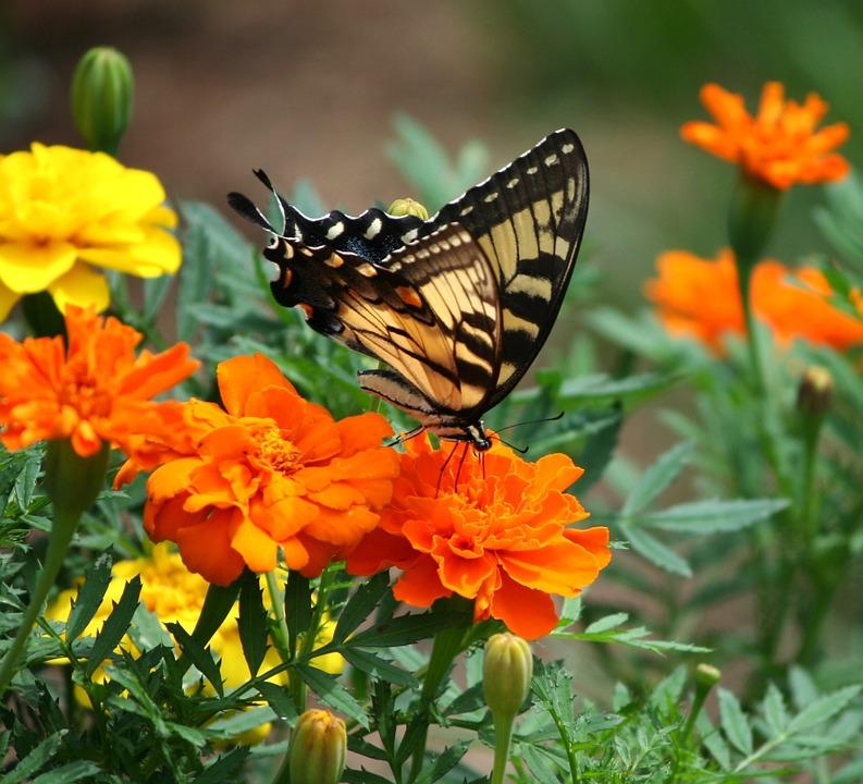 Симптомы и лечение боязни бабочек