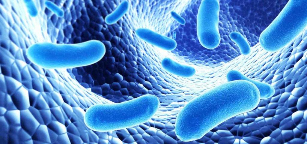Бактерии в кишечнике новорожденного