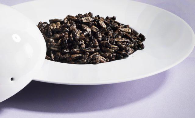 Сушеное насекомое на блюде