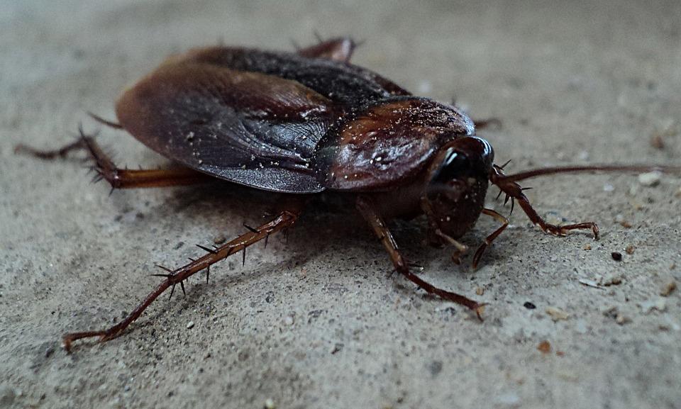 Причины и проявления боязни насекомых