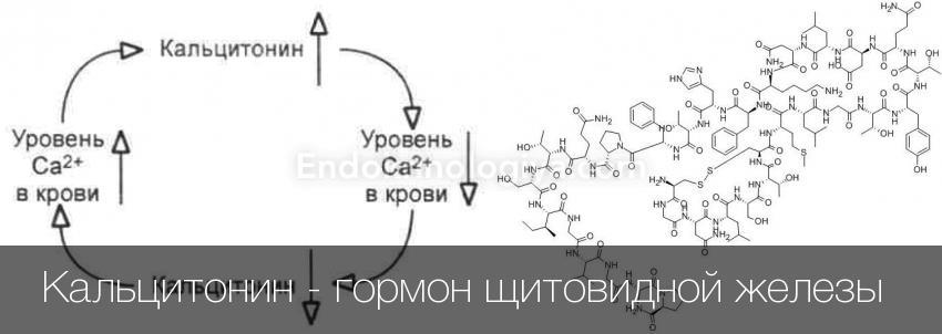 гормон щитовидки