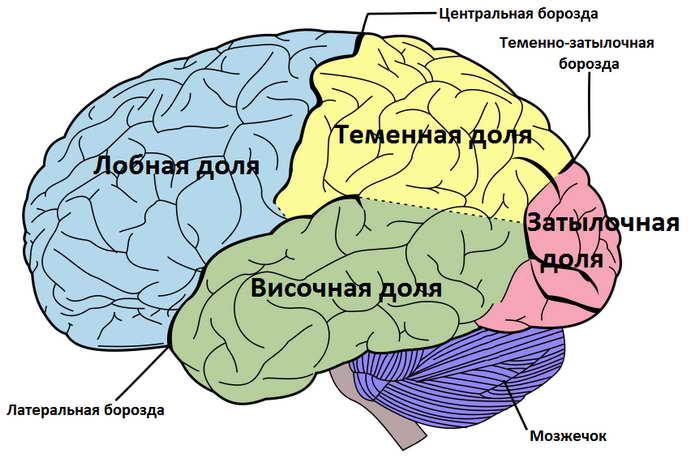 виды эпилепсии у детей