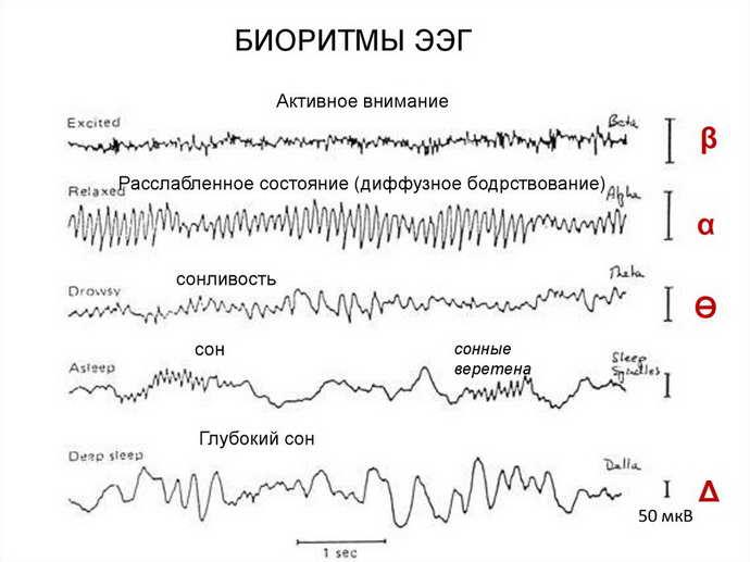 Анализ ритмичности биоэлектрических импульсов