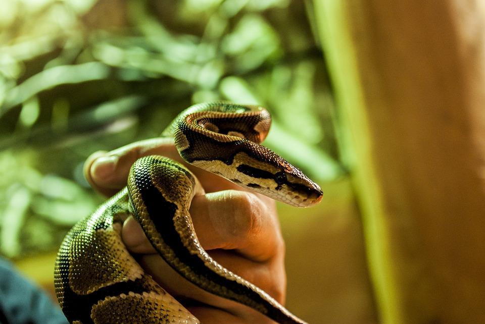 У пациента боязнь змей