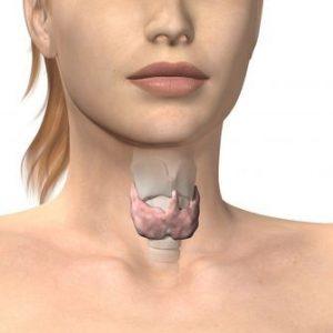 Маленькая щитовидная железа что это значит?