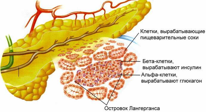 поддается ли лечению атаксия фридрейха