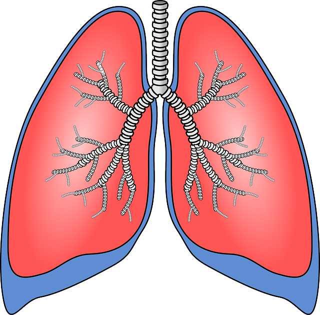 Пути заражения туберкулезом легких