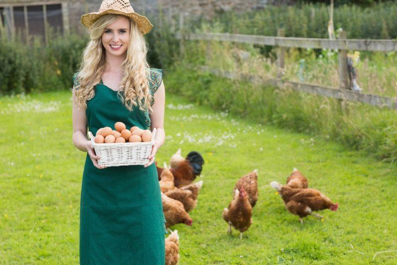 Куриные яйца при гв