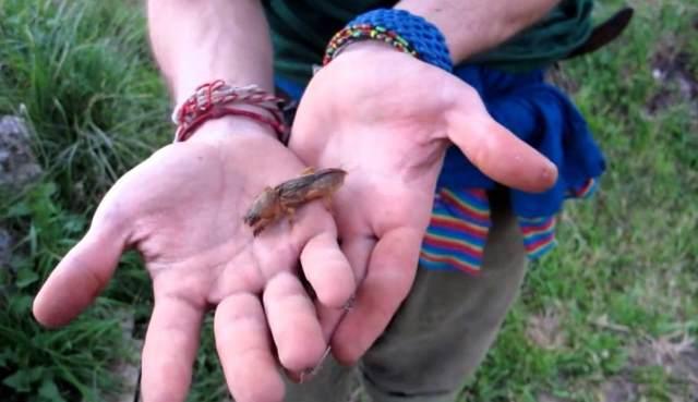 Уникальное насекомое капустянка