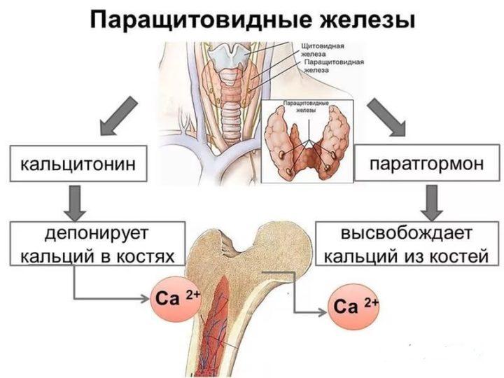 гипопаратиреоз симптомы и лечение