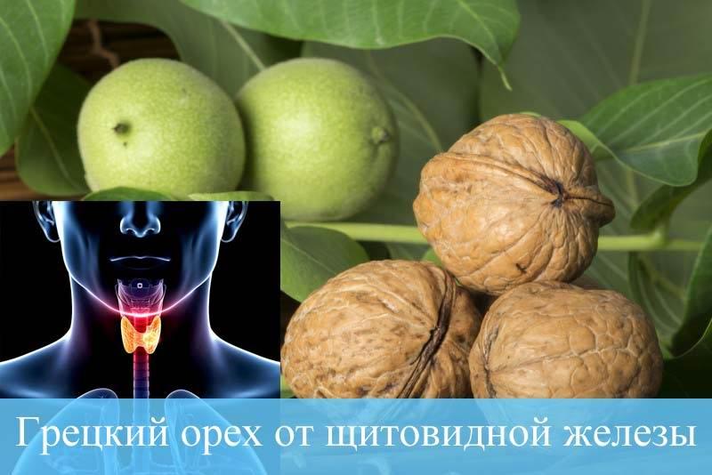 Грецкий орех от щитовидной железы