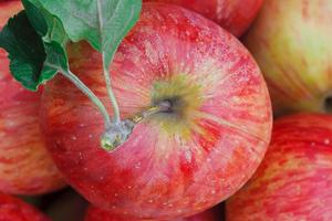 после яблок постоянно пучит живот