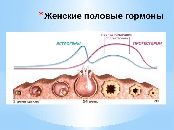 болит грудь в середине цикла