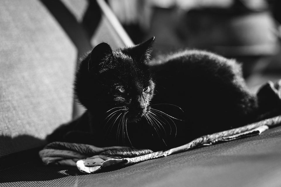 Как проявляется и лечится боязнь кошек