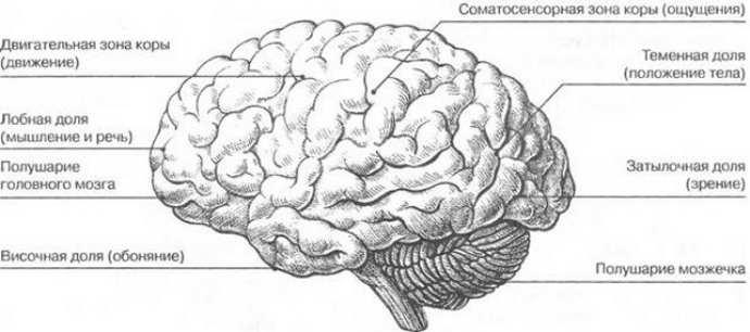 аноксическое поражение головного мозга причины