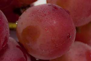 сильное отравление виноградом