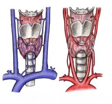 Кровоток в щитовидной железе
