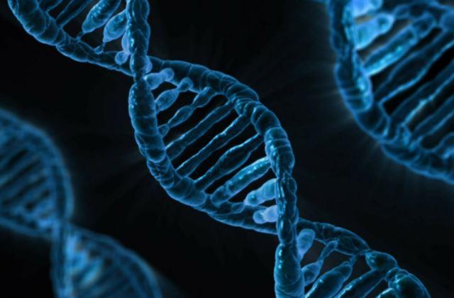 Структура ДНК для анализа на ПЦР