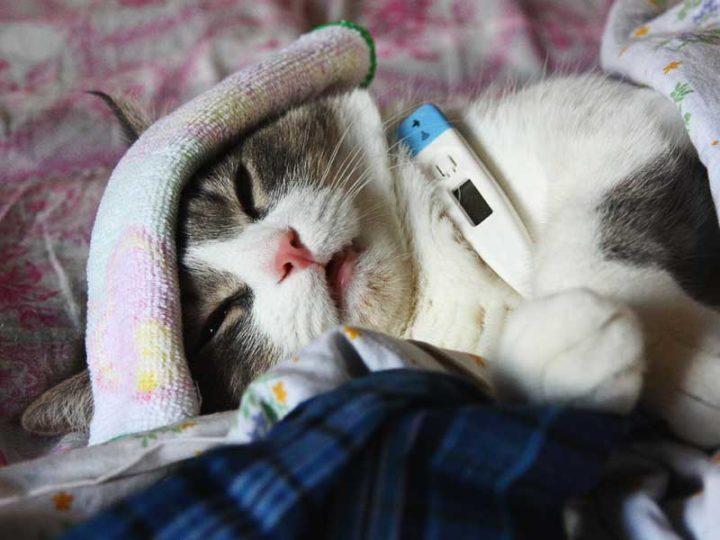 температура при щитовидке